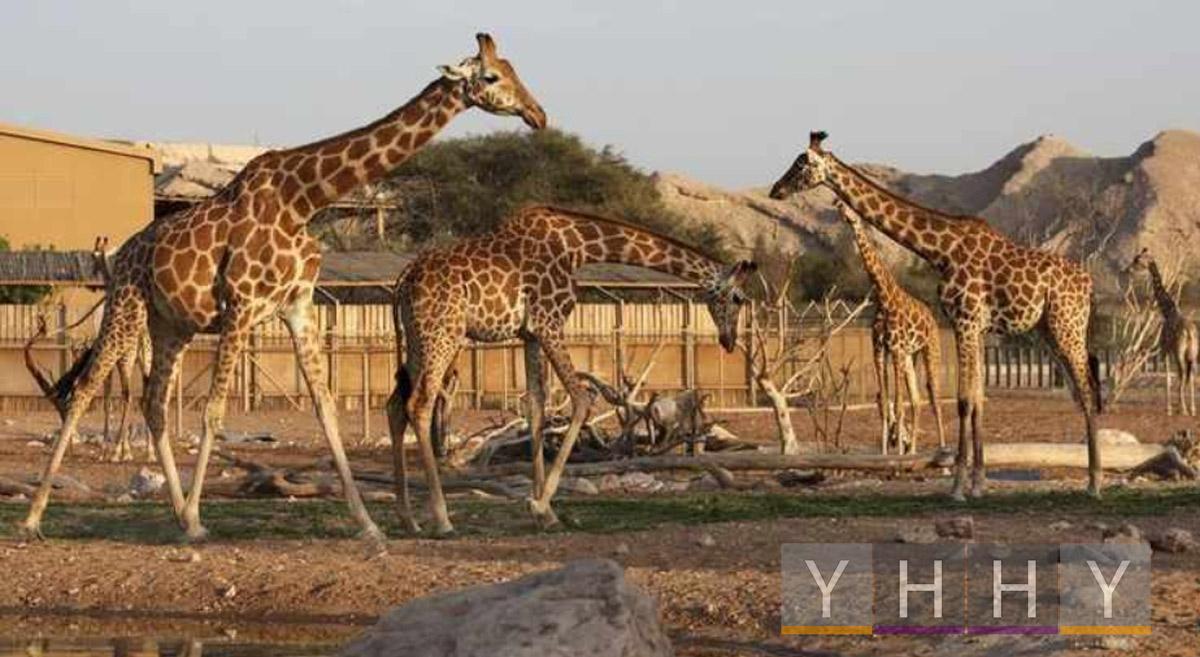 Аль-Айнский зоопарк, самый большой в ОАЭ