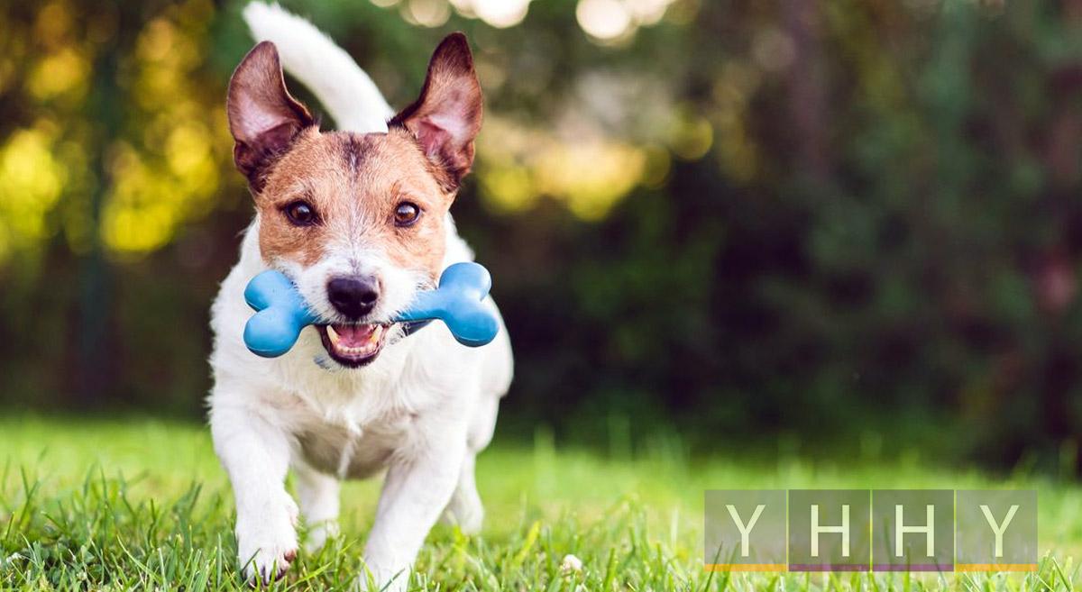 Игрушки и принадлежности для собак
