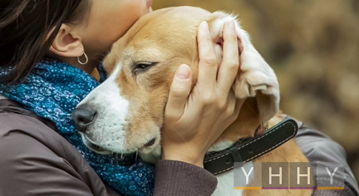 Основы ухода за собаками