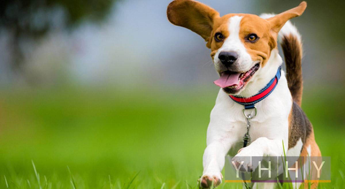 Основы здоровья собак