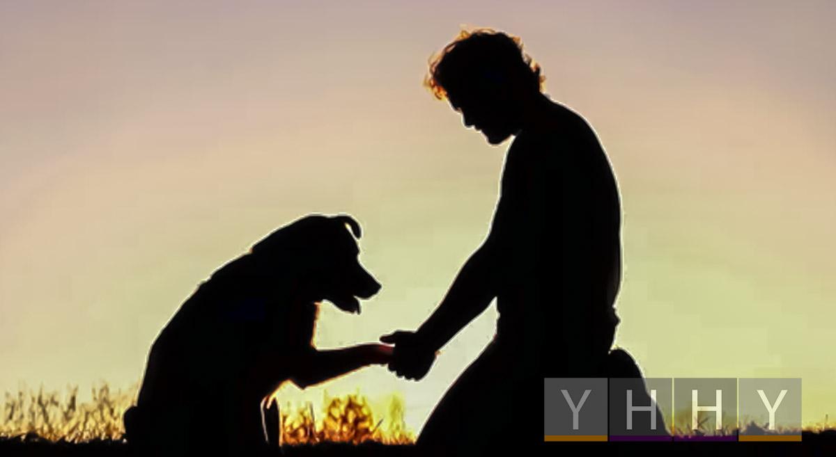 Как справиться с потерей домашнего животного