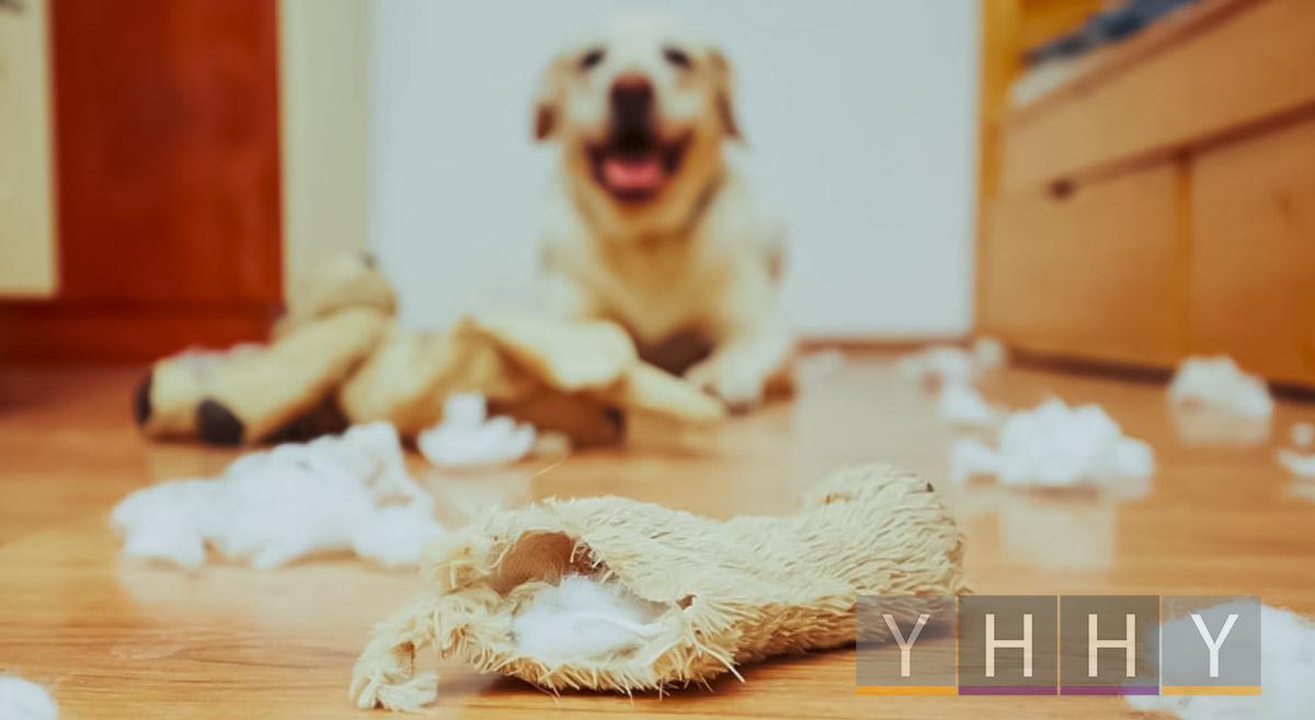Проблемы с поведением собак