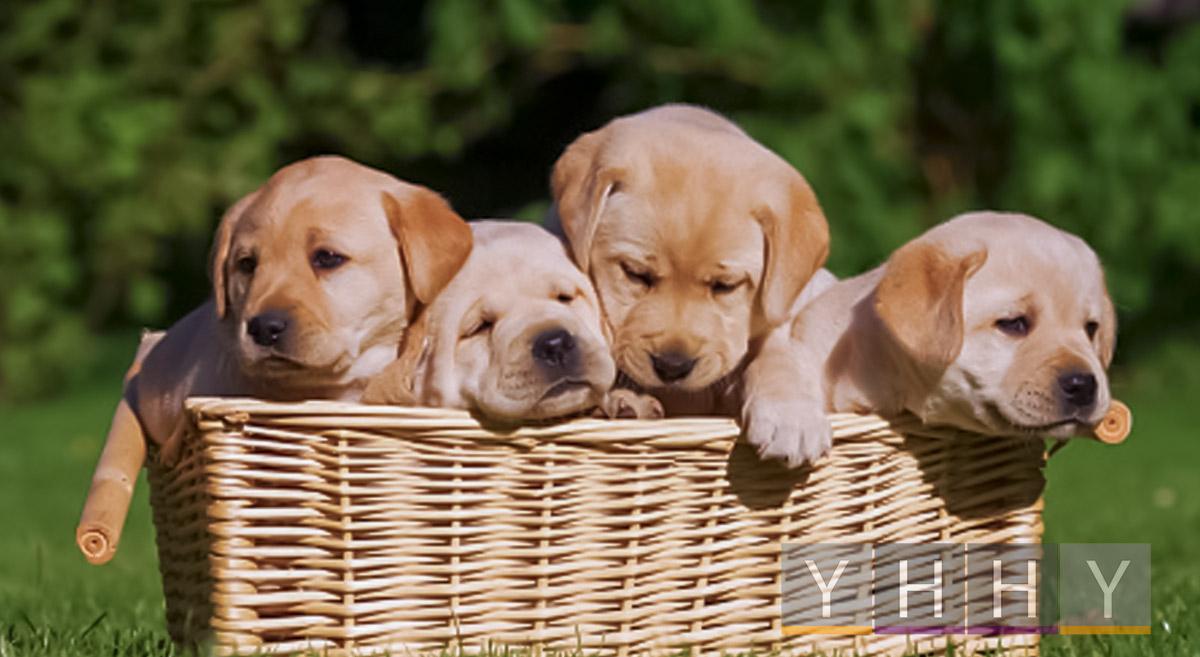 Уход за щенками собак