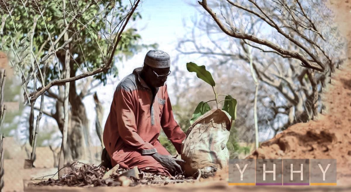 Фермер восстанавливает лес из пустыни в Буркина-Фасо