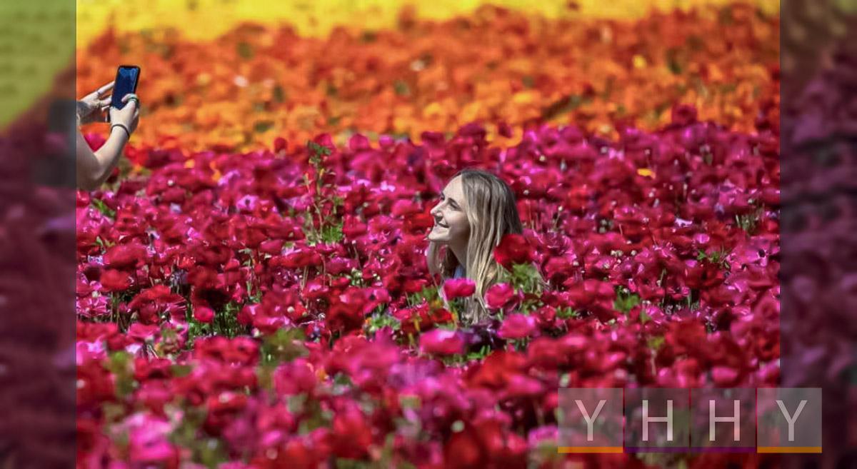 Цветочные поля Карлсбад в Калифорнии приветствуют посетителей пышными цветами