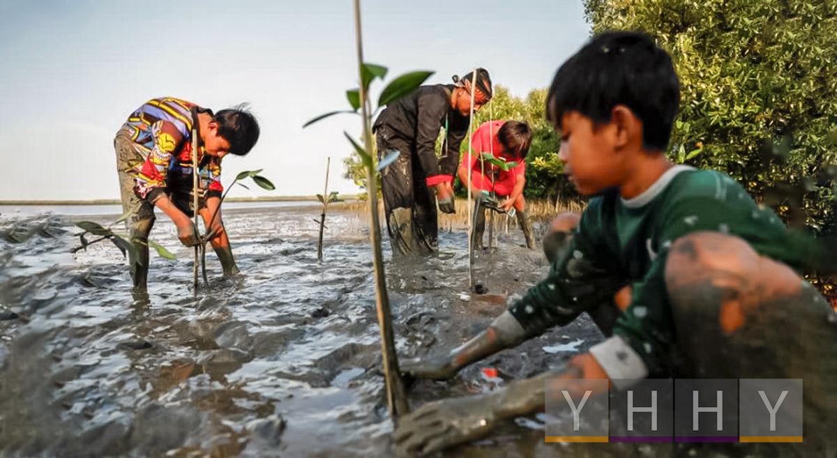 Экологи сражаются за спасение мангровых зарослей Индонезии