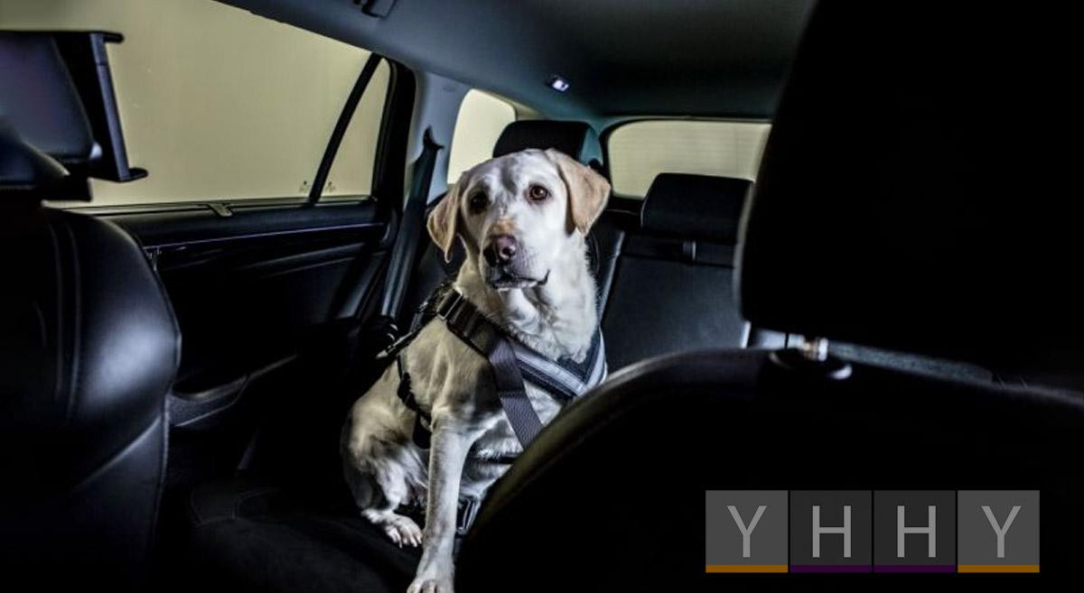 Как обезопасить собаку в машине?